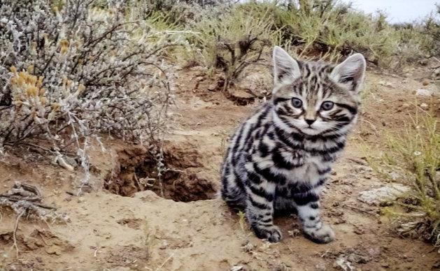 BBC告诉你:如何为野生动物讲一个漂亮的故事